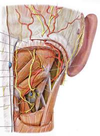 むちうちの症状の医学的分類のイメージ